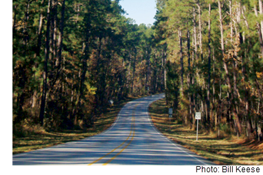 A view of a two-lane road curving out into the distance through the Piney Woods.