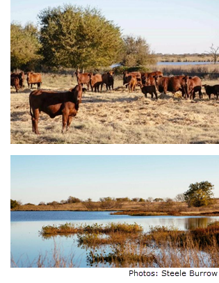 Images of The Wynne Ranch