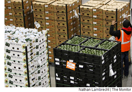 Boxes of avocados brought into the new facility.